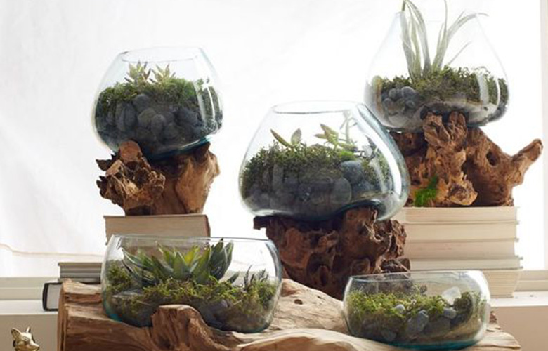 home2-home-box1-terrarium